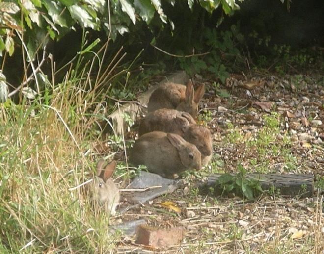 rabbit,rabbit,rabbit,rabbit