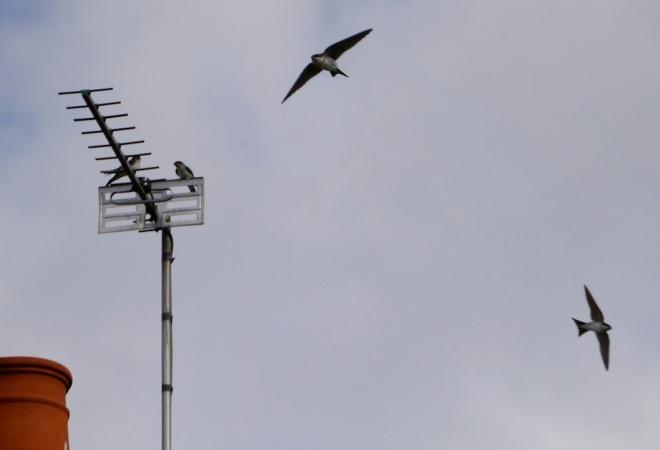 aerial 1