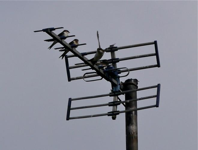 aerial 3