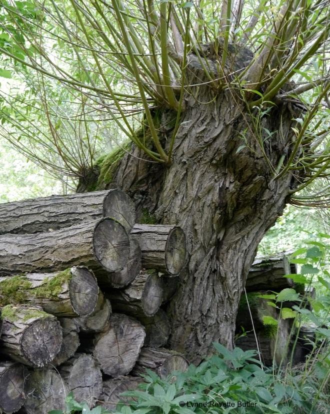 cowood 1