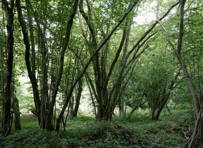 cowood 3
