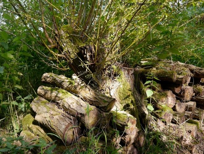 cowood 4
