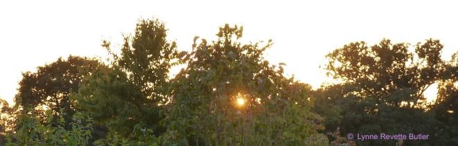 sunsetlilac
